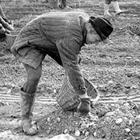 09:1975 <br>Картошка в Ступинском районе